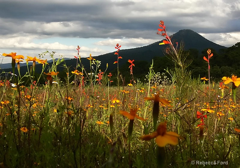 Fall Wildflowers,  Michoácan
