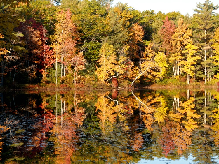Reflections, Gile Pond, New Hampshire