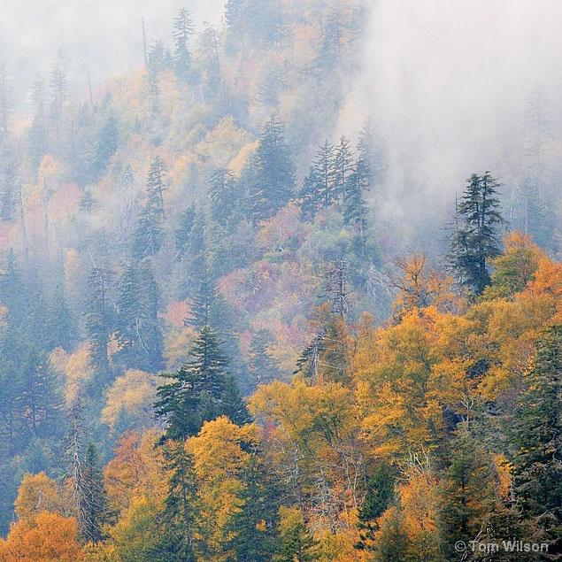 Ridges in Mist