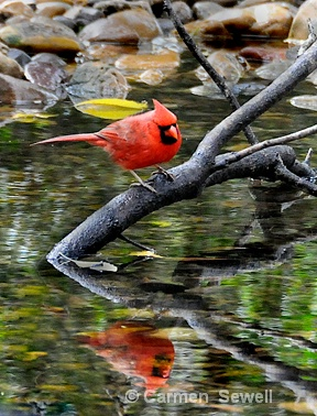 Cardinal reflection
