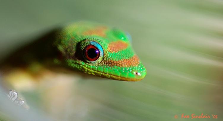 Gecko Rescue 2