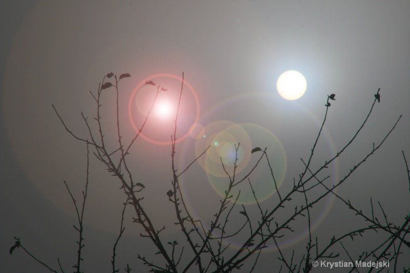 Apple tree in the foggy sun blik