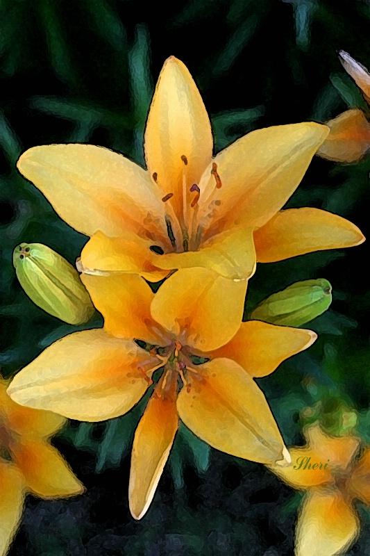 Lily Photo Art