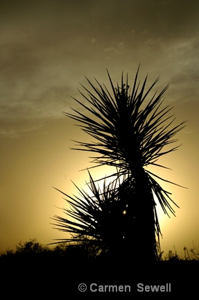 Yucca Silhouette