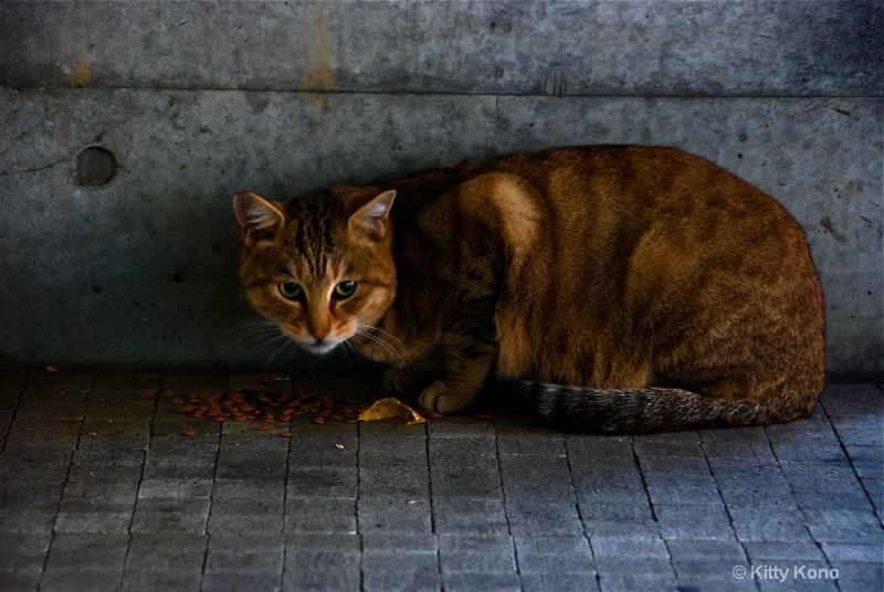 Stray Cat having Breakfast