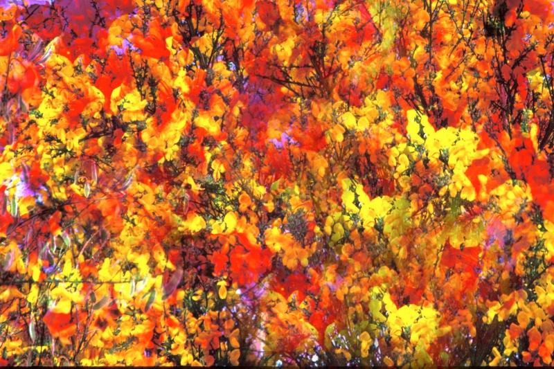 Autumn Spray