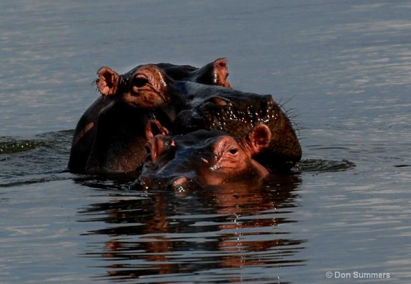 Hippos, Akagera N.P. Rwanda 2008