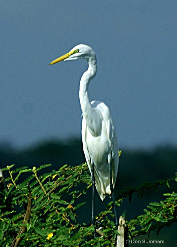 Heron, Akagera N.P. Rwanda 2008