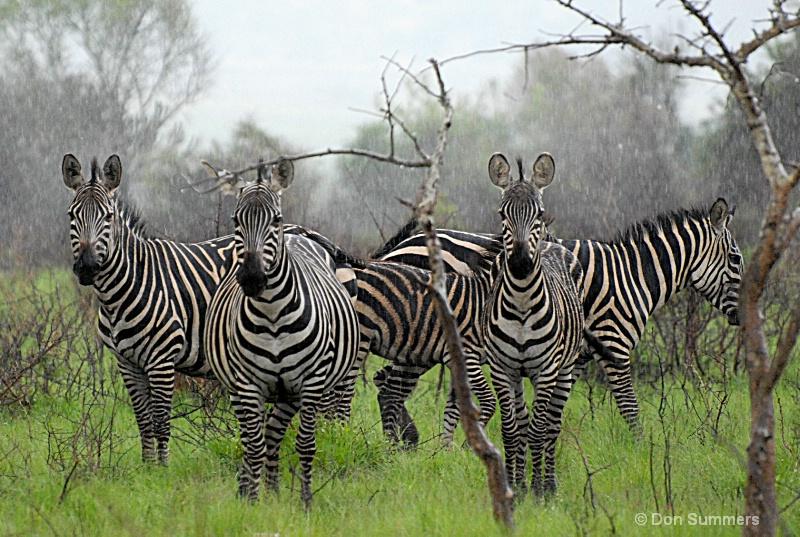 Akagera National Preserve, Rwanda 2008