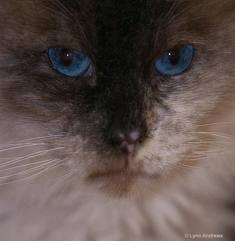 Blue Mad 2
