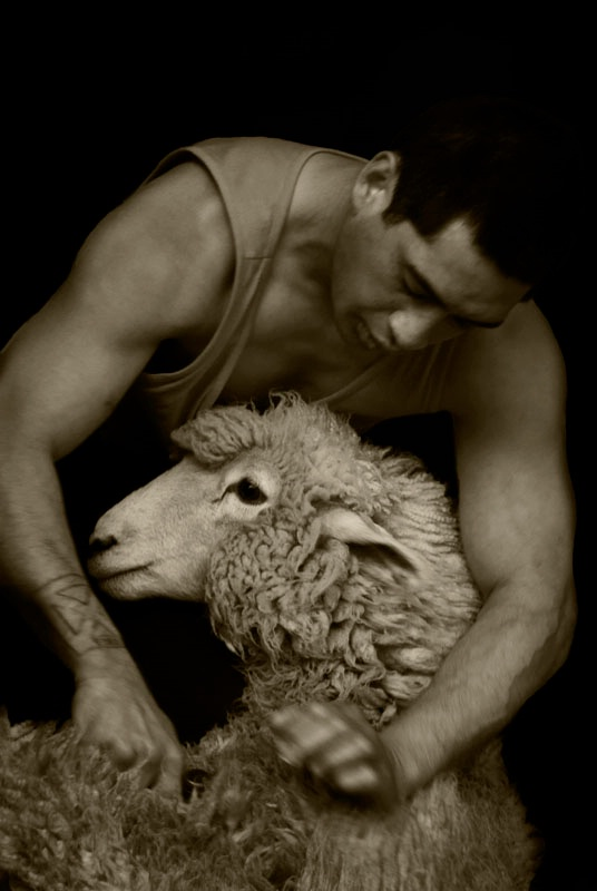 Shear Pleasures