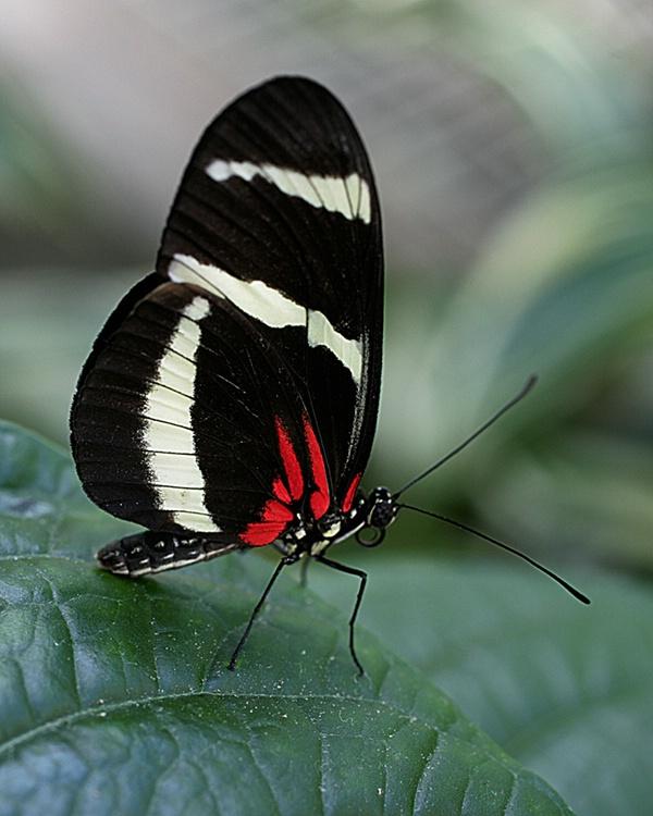 033butterfly