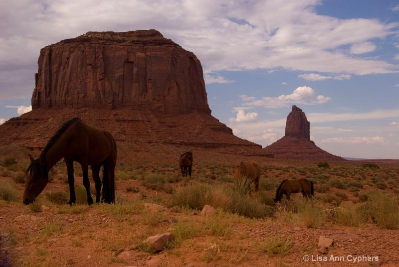 Wild ponys @ Monument Valley, Az