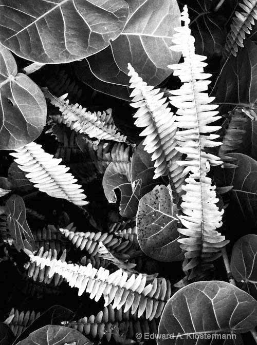 ferns- -plants,Sarasota