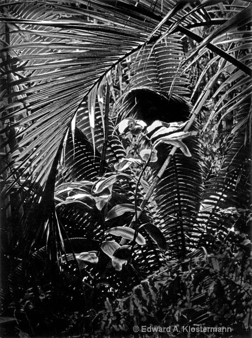 tropical view-climatron