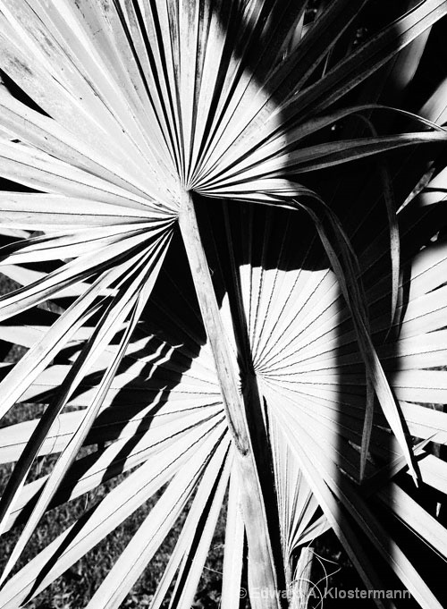 palm-frond-mobot-2008