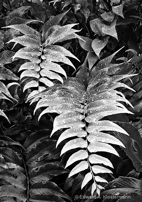 tree-fern # 2, mobot