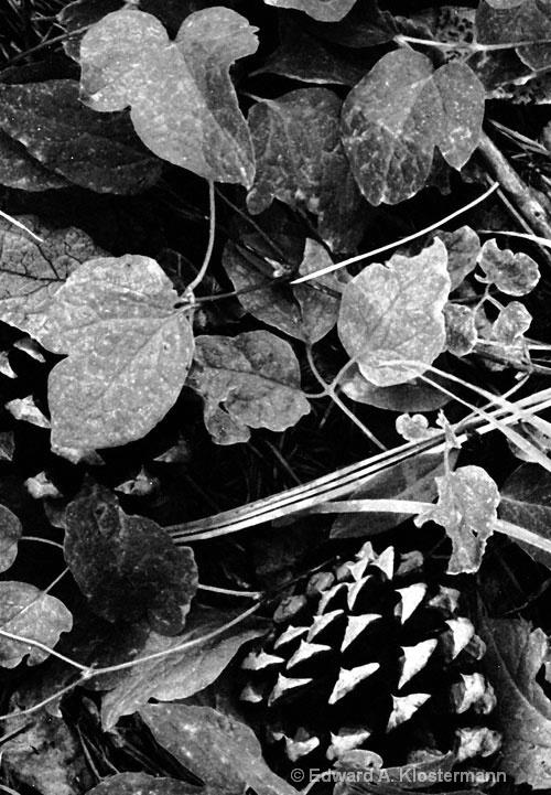 pinecones & ivy