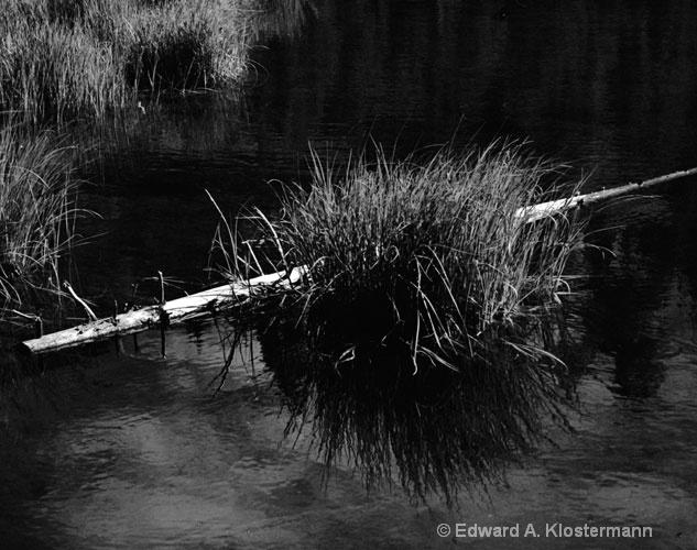 bush, log and water