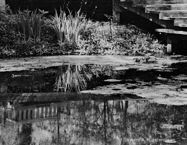 Scenic Shot-Arboretum