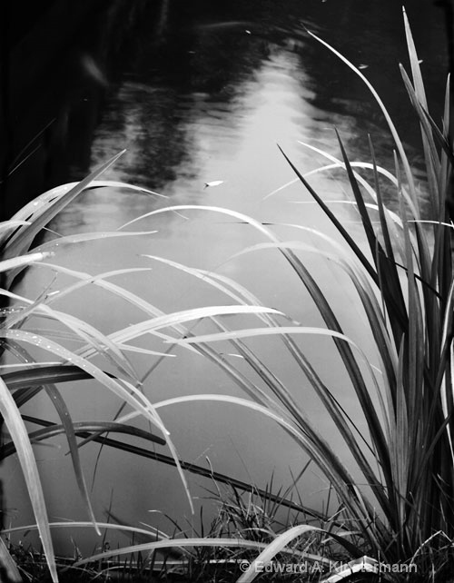 Reeds,Water and leaf
