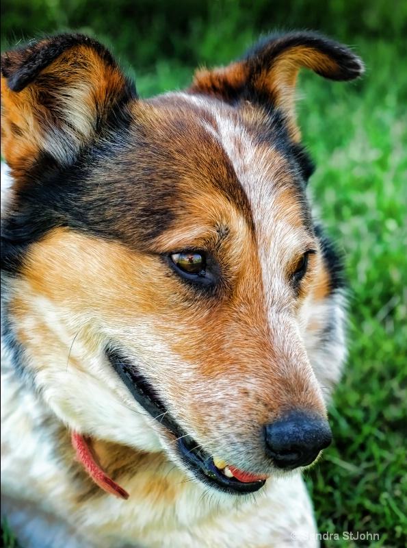 Red Dog II