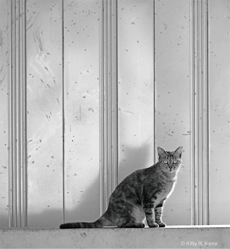 Plain Old Cat