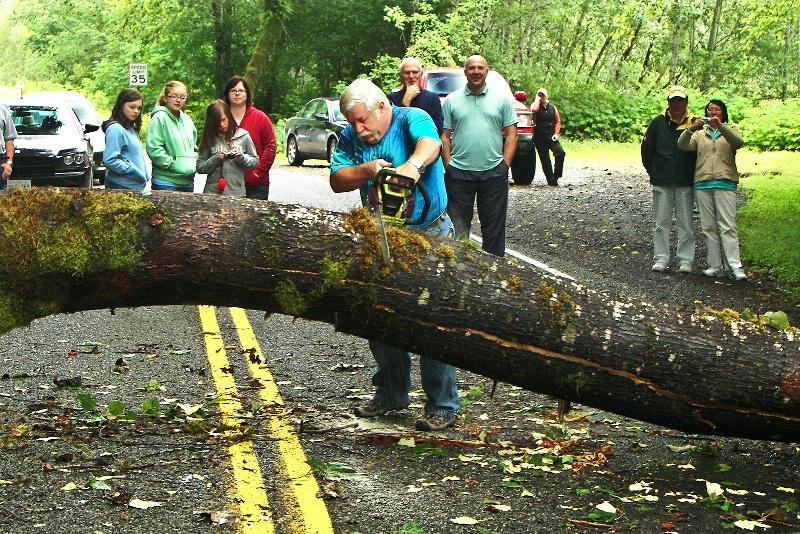 The Good Samaritan, Hoh Rain-forest-WA