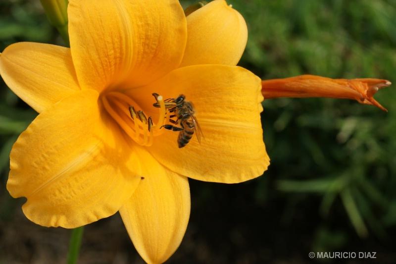 Bee hungry