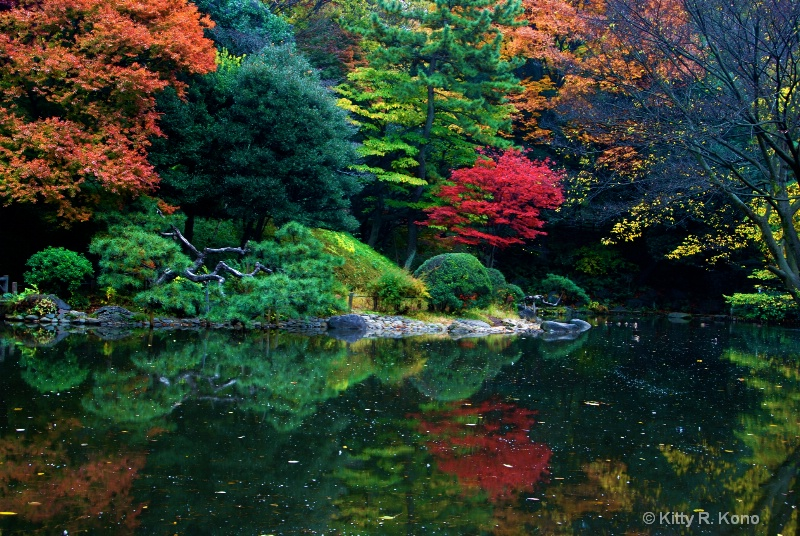 Oh the Color - Arisugawa Fall