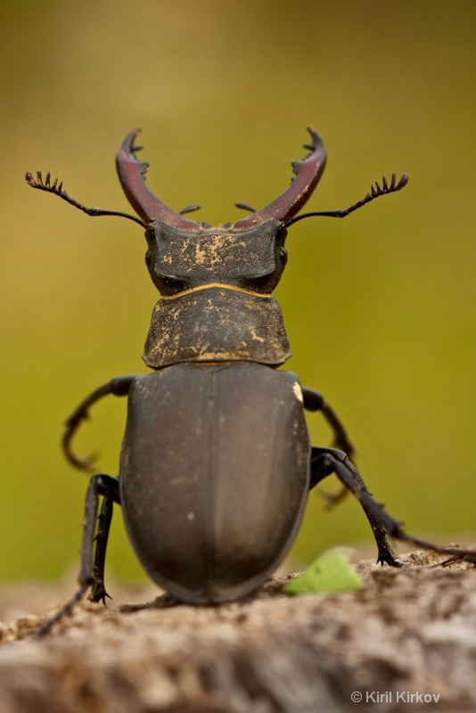 beetle3- 3