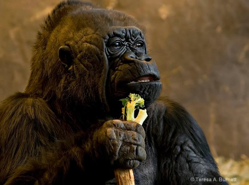 Nina Says ~ I Don't Diet .......