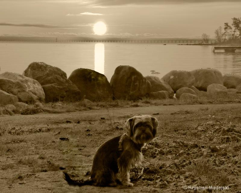 Kliford on the beach by the sunrise- Sweden Kalmar
