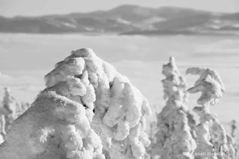 Snowy trees BW