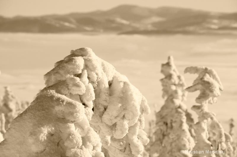 Snowy trees S