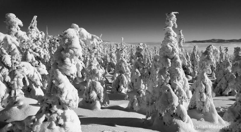 Snowy trees on Male Skrzyczne BW