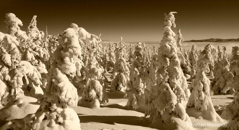 Snowy trees on Male Skrzyczne S