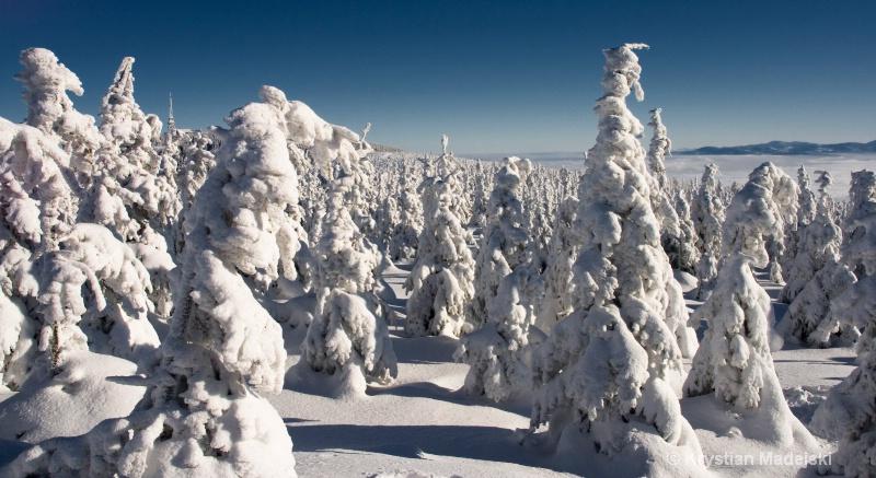 Snowy trees on Male Skrzyczne