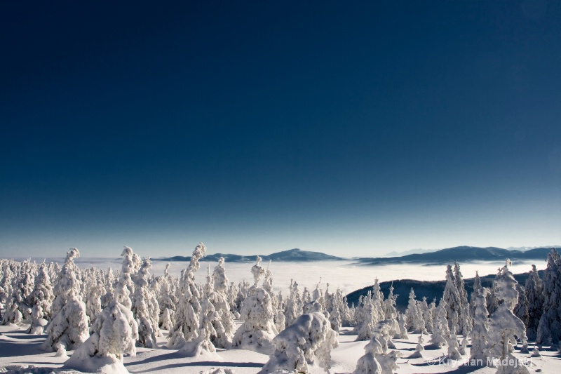 Mountains and snowy forest