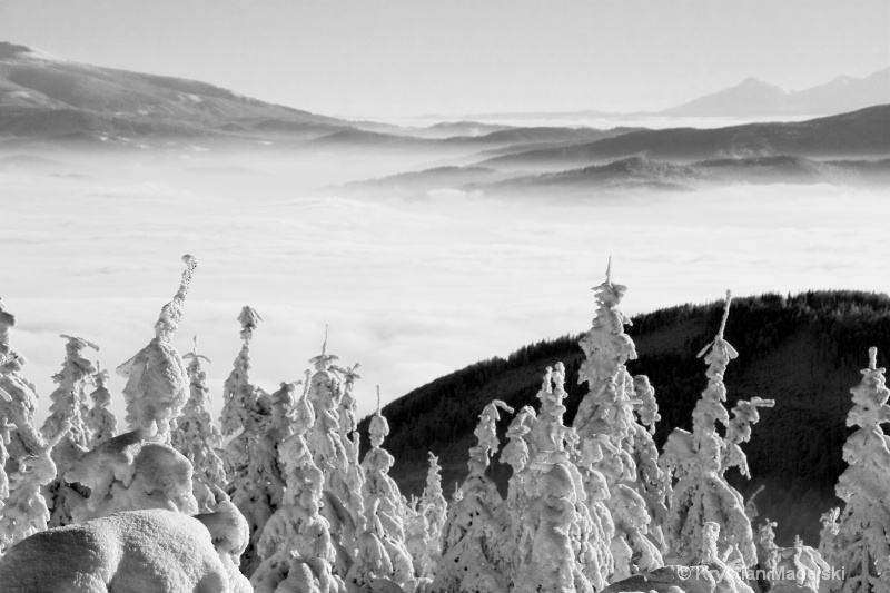 Mountains and snowy forest BW