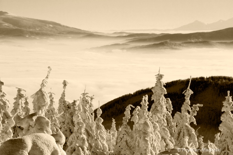 Mountains and snowy forest S