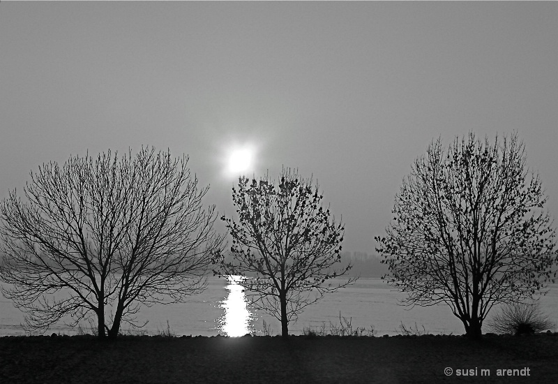 Three Trees (on the Elbe)