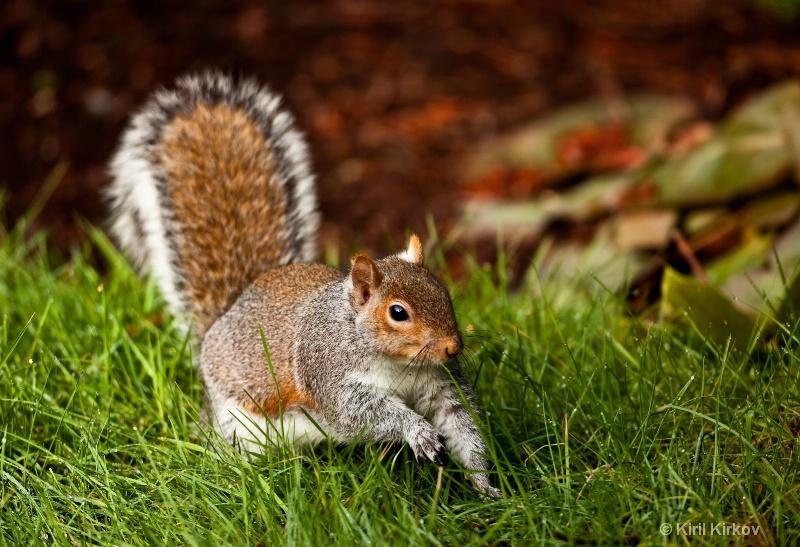 Morning Squirrel