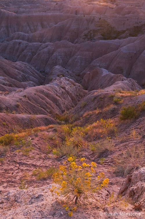 Badlands, SD Sunset Bush 5076