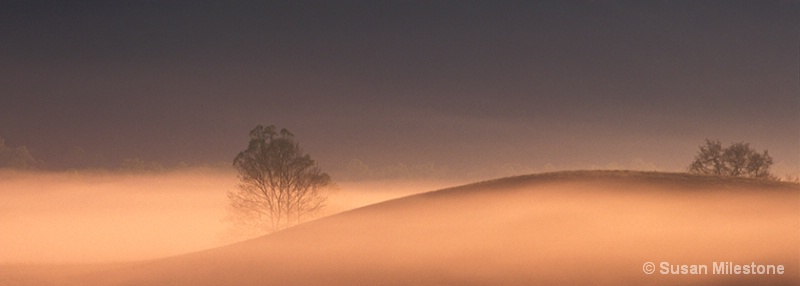 Cades Cove Mist