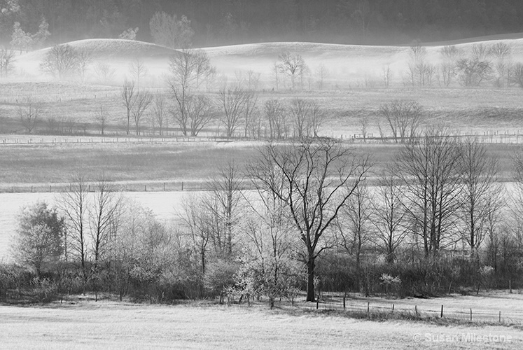 Cades Cove Infra Red 5970