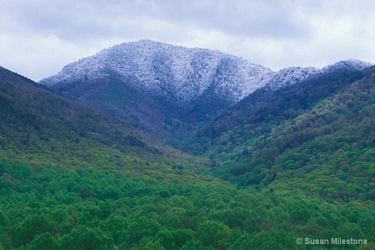 Mt Le Conte Spring Snow