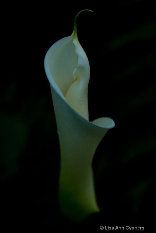emerging beauty