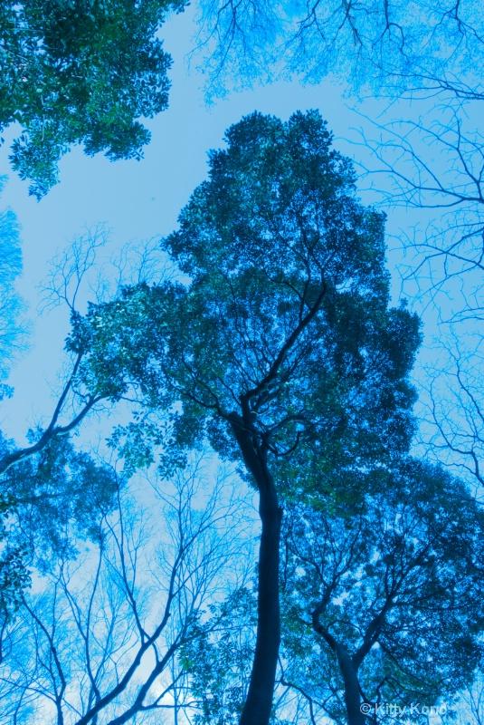 Branch in the Sky at Arisugawa
