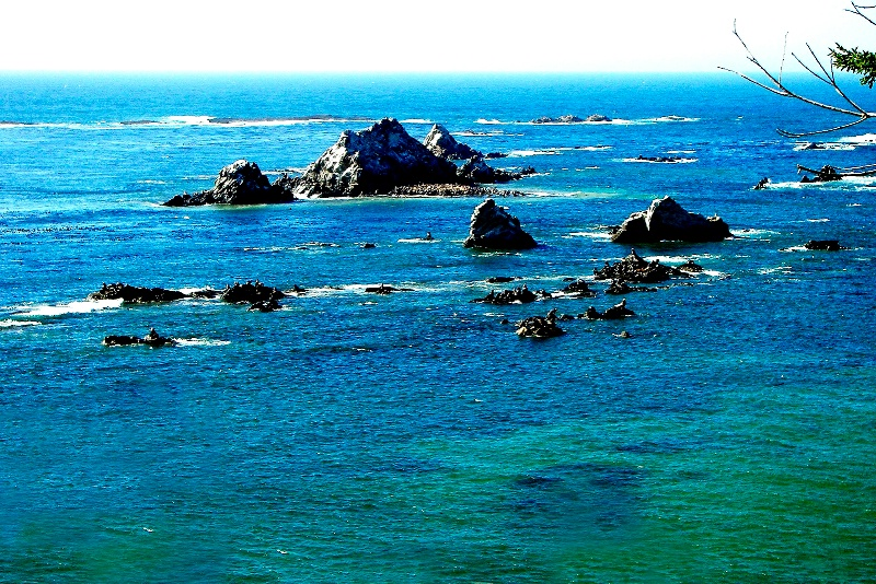 Sea Lions, Sunset Bay-Oregon
